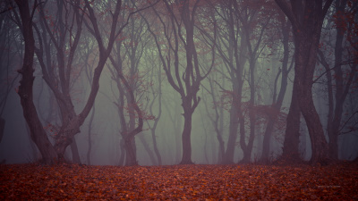Haunted Hoia Baciu forest