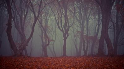 Haunted Hoia Baciu forest