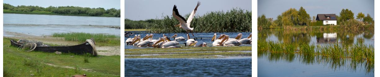 Danube delta boat trip