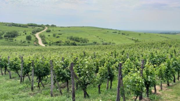 Wine tasting trip from Bucharest